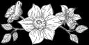 kwiat128